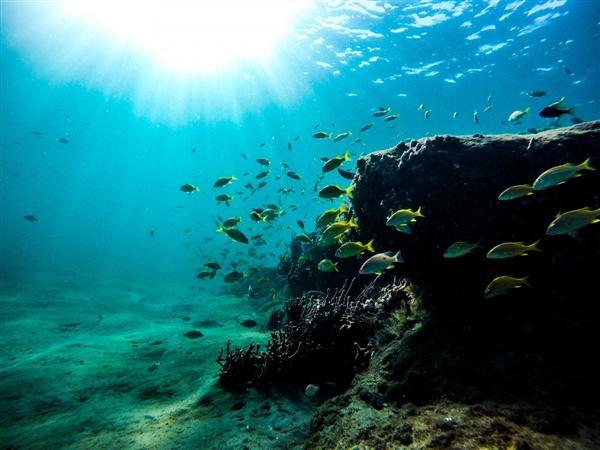 美国军方欲利用海洋生物检测海底威胁