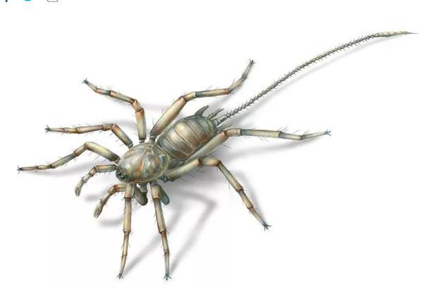 缅甸琥珀中藏着1亿年前类似蜘蛛的奇怪生物