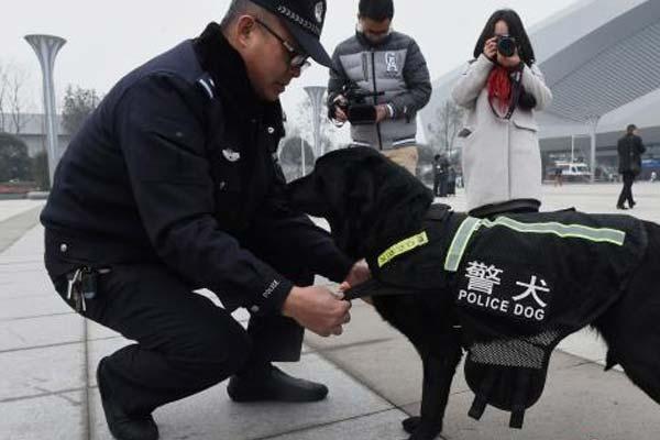 重庆警犬上岗助阵旅客平安出行