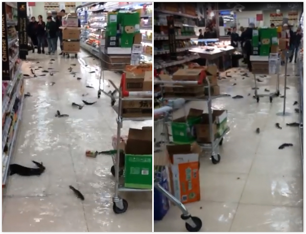 格鲁吉亚超市水族箱爆裂 遍地是鱼