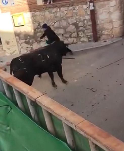 西班牙狂暴公牛冲破安全屏障用角顶飞婴儿车