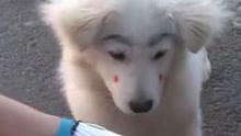 狗狗每天来自己饭店蹭吃 老板怕遭人欺负给它画上眉毛