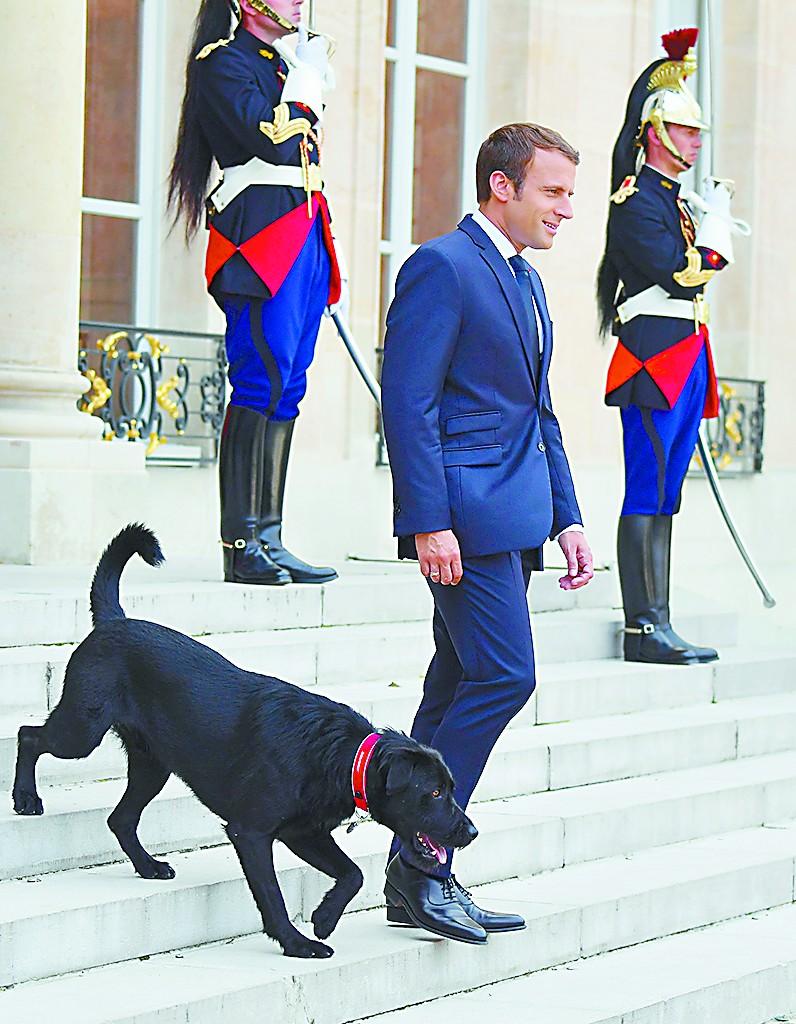 百姓茶餘飯後趣談 法國總統府宮狗傳奇演不停