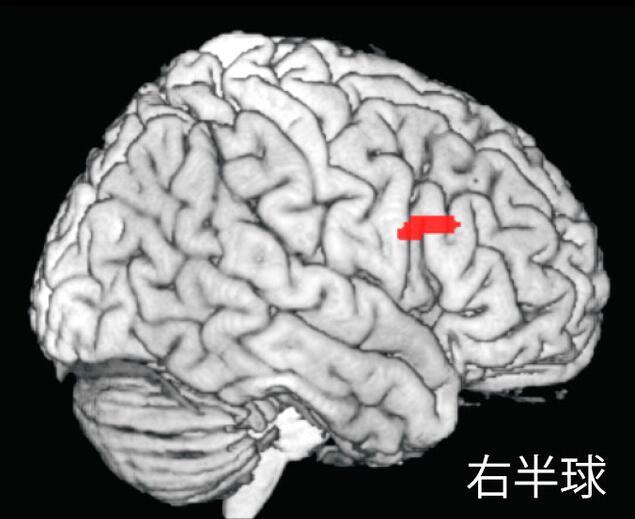 日本大学研究:育儿孤独感会削弱母亲大脑活跃程度