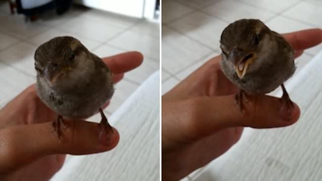 可爱!小麻雀听摇篮曲入迷一脸陶醉