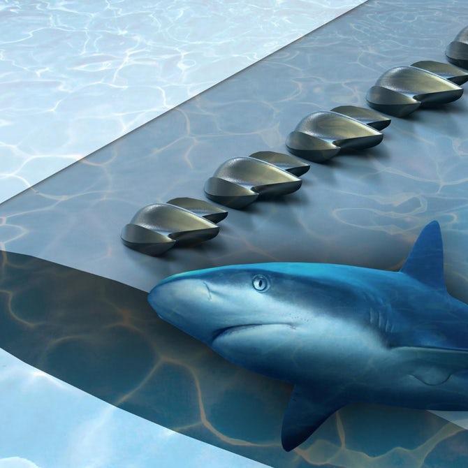 鲨鱼皮鳞片研究或提升飞机和风力涡轮机的空力设计