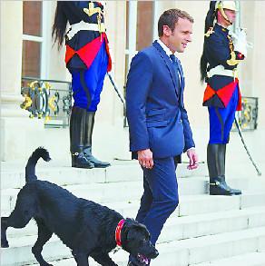 百姓茶余饭后趣谈 法国总统府宫狗传奇演不停