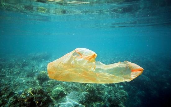 """海龟误吞 毒死珊瑚:乱扔塑料袋 瞧人类干的""""好事"""""""