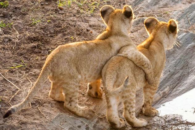 治愈系友情!小动物拍亲密照暖化人心