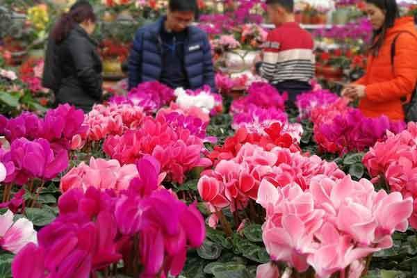 青岛:春节近 鲜花俏