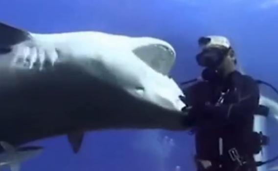 潜水员捉住虎鲨血盆大口
