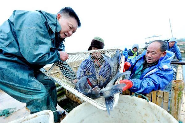 江西鄱阳渔民喜丰收 起鱼回家过大年