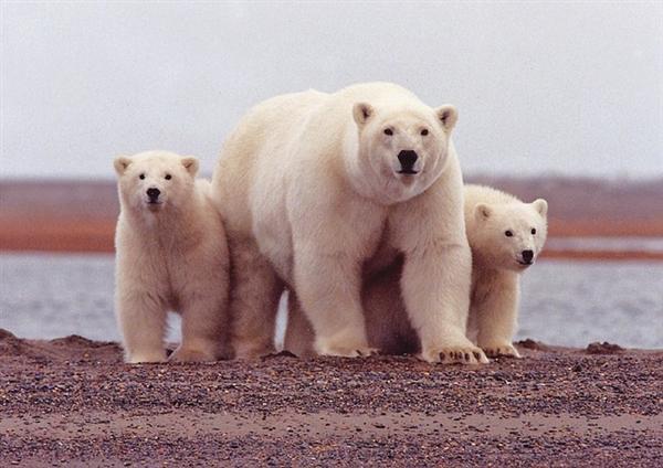 北极冻土内发现天然汞库 或对生态环境产生影响