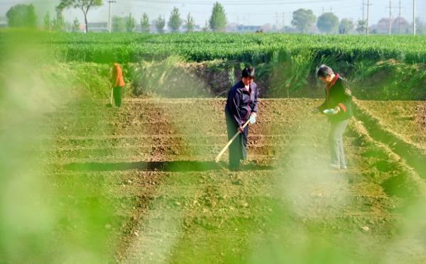农业部:研究制定落实土地承包期冉延长30年呼