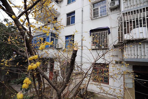 江苏太仓退休官员被举报闯入民宅砍伐邻居名贵树,警方已立案