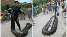6米长母蛇躲树洞里正约会 被村民揪出来吃掉了