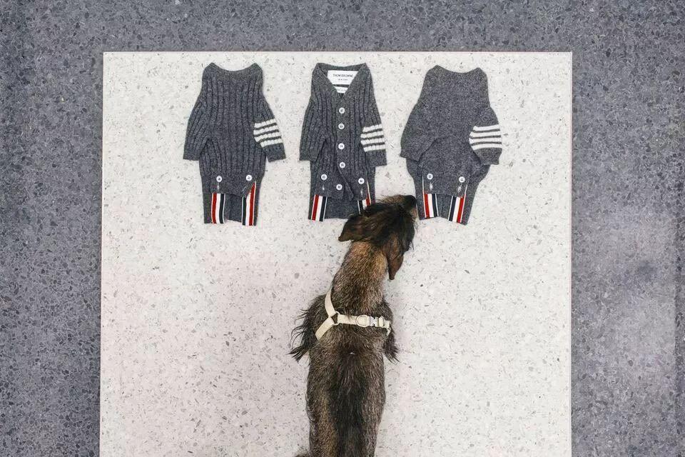 穿大牌拍大片,真是人不如狗啊!