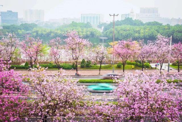 """南风窗征集""""爱上广州的100个理由"""",万元红包等你拿"""