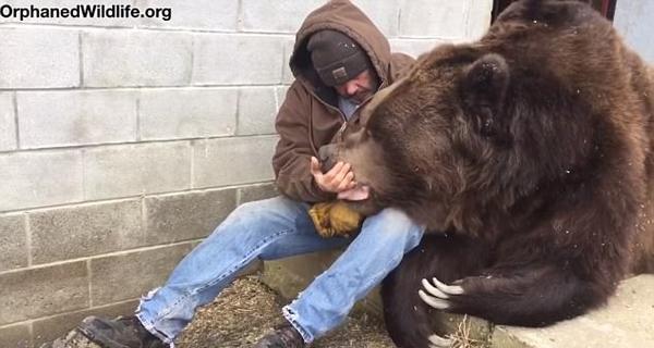 温馨一刻!美饲养员安慰生病巨熊送爱的抱抱