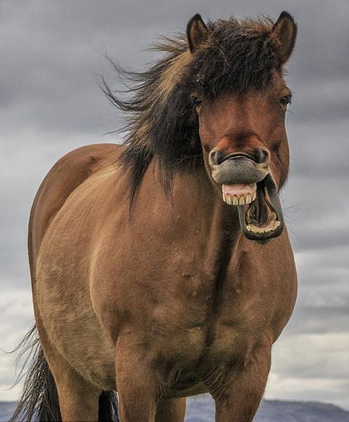 アイスランド写真家、「ハッピー...