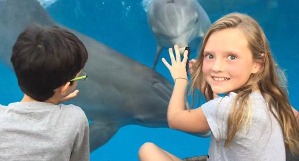 神奇!美国一女孩成功用梳子与海豚交流