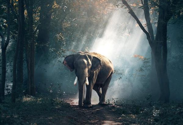 哺乳动物存续至今的金法则:体型越大越不易灭绝