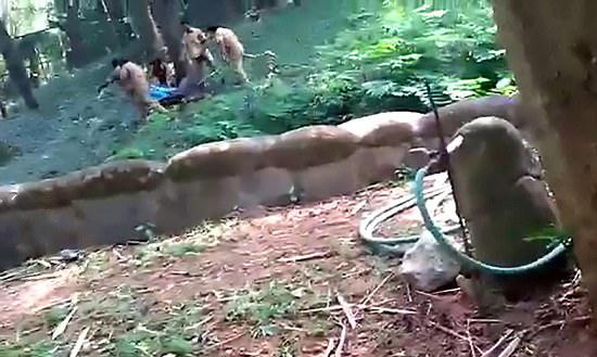 印男子酒后闯入动物园狮子区 幸而获救