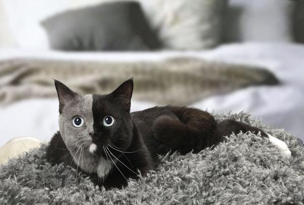 摄影师拍照稀有 双脸猫 或为两个受精卵交融成果