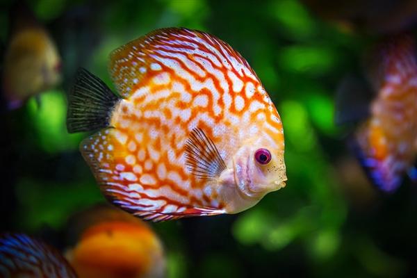 科学家深海中发现奇异新动物:眼睛能变色的鱼