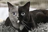 """摄影师拍摄罕见""""双脸猫"""""""