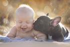 狗年看萌娃与萌犬的日常