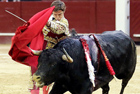 斗牛士被牛顶飞刺伤臀部