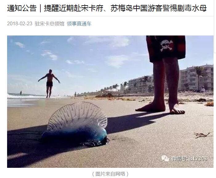 泰国海滩现大量可致死剧毒水母 我使领馆提醒赴泰中国游客注意安全