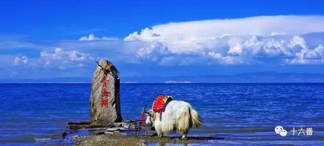 除了青海湖还可以去这里,一年四季美的沉醉,不愿醒来!
