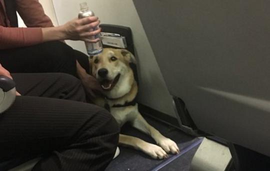 女童登机被狗咬伤 美西南航空却坚称不改这项规定