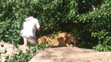 印度男子酒后爬进动物园狮山 称只想和母狮子聊聊天