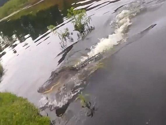 贪婪鳄鱼蹿出水面 瞬间抢走渔夫渔获