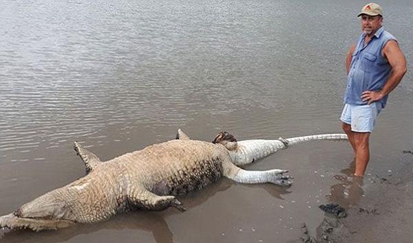 4.1米长鳄鱼圣灵降临节死亡引关注