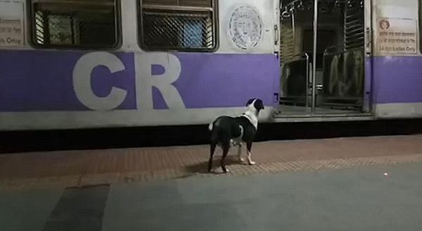 心酸!印车站一流浪狗每夜坚守 似找寻昔日主人