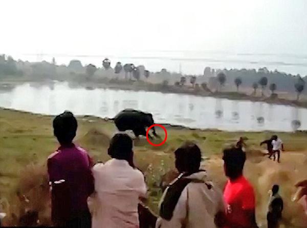 """印度""""大象起义"""" 人象土地冲突致一人被踩死"""