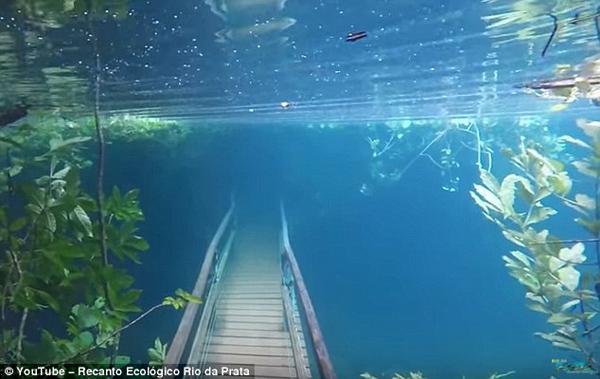 大自然鬼斧神工!巴西强暴雨塑造别样水下雨林