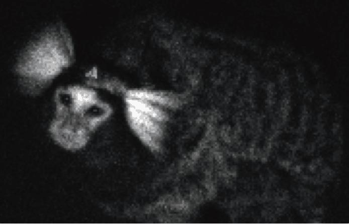 日本研发出新型生物发光系统 可观察活体动物脑活动