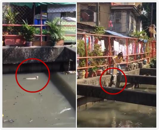 暖心!菲律宾女子用木板救起落水小猫