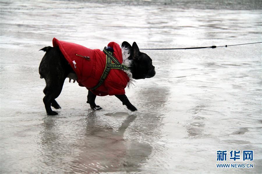 2月27日,在挪威朗伊尔城,一只小狗走在冰雪融化的路面上。新华社记者梁有昶摄