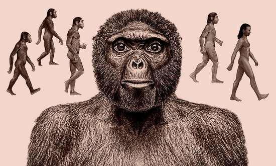"""揭秘人类进化历程:地铁上可能会遇到一张""""智人脸"""""""