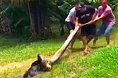 巴西小狗遭巨蟒死死缠住 村民合力营救