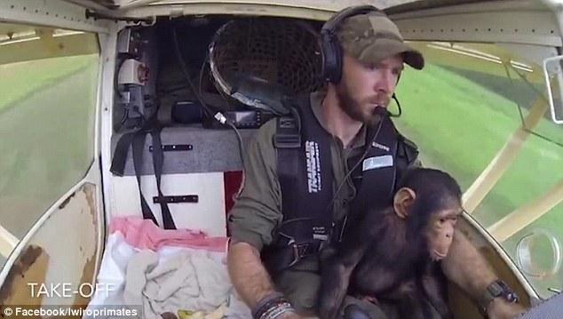 暖心!黑猩猩获救与救援人员共驾飞机至新家