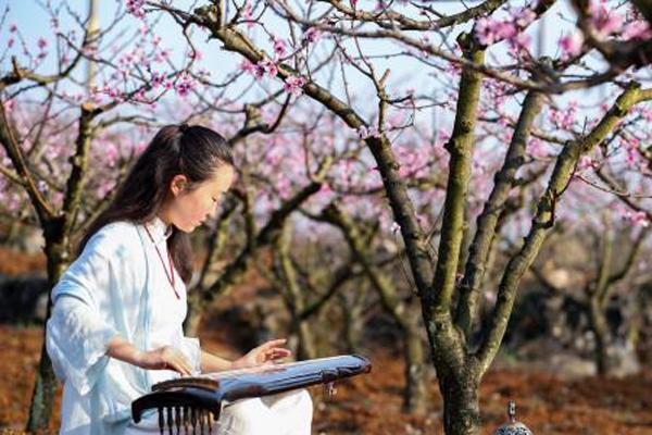 贵州兴义万亩桃园抚琴赏春