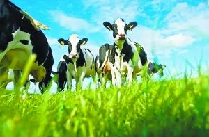 菲仕兰发力低端奶粉:市场需求走低 未来前景不明朗