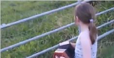 女孩演奏手风琴牛群列队